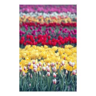 Tulip display garden in the Skagit valley, Photo Print
