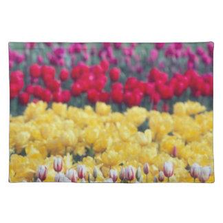 Tulip display garden in the Skagit valley, Placemat