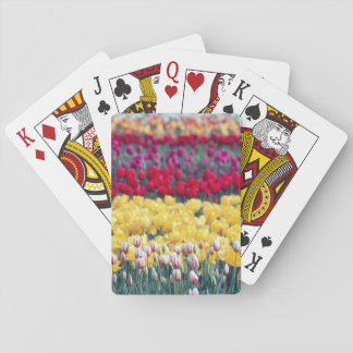 Tulip display garden in the Skagit valley, Poker Deck