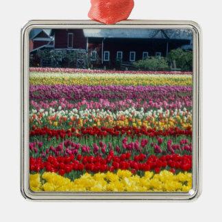 Tulip display garden, Skagit county, Christmas Ornament