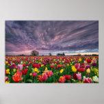 Tulip Farm in Woodburn Oregon Spring Season Poster