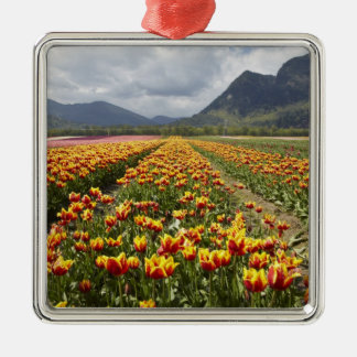 Tulip Farm near Agassiz, British Columbia, Christmas Ornament