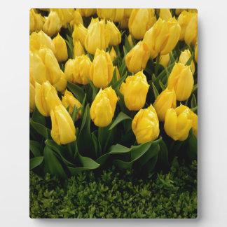 Tulip Festival - 27 Photo Plaque