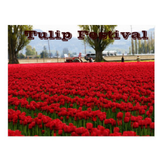 Tulip Festival Postcard