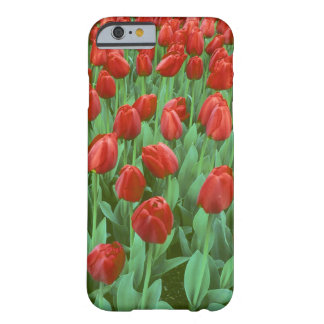 Tulip field blooms in the spring. barely there iPhone 6 case