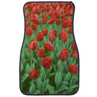 Tulip field blooms in the spring. car mat