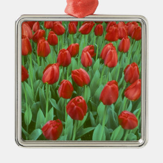 Tulip field blooms in the spring. christmas ornament
