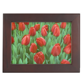 Tulip field blooms in the spring. memory box