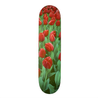 Tulip field blooms in the spring. skate board decks