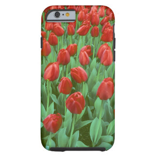 Tulip field blooms in the spring. tough iPhone 6 case