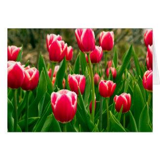 Tulip Field Card