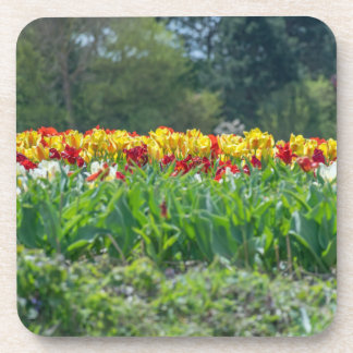 Tulip field hard plastic coasters