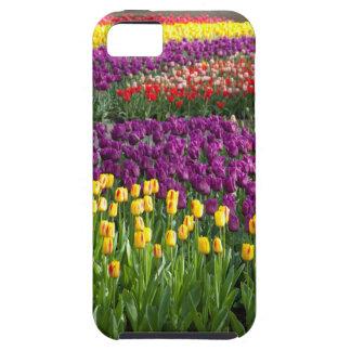 Tulip Field iPhone 5 Cases