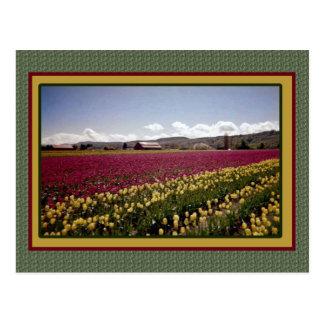 Tulip Field Postcard