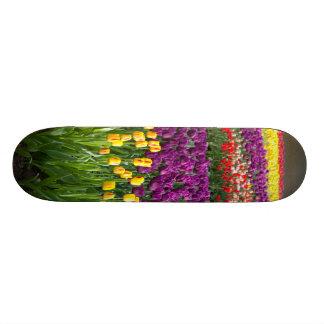 Tulip Field Skateboard Decks