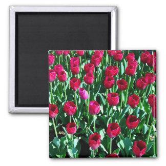 Tulip Field Square Magnet