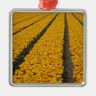 Tulip field, The Netherlands Christmas Ornament