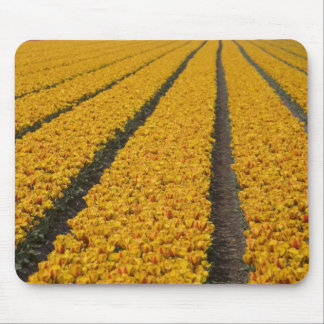 Tulip field, The Netherlands Mouse Mat