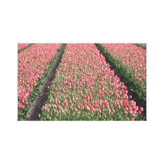 Tulip Fields Canvas Print