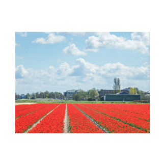 Tulip fields in Holland canvas print