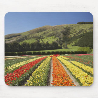 Tulip Fields, near Tapanui, West Otago, South 2 Mouse Pad