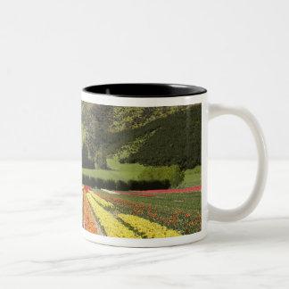 Tulip Fields, near Tapanui, West Otago, South 2 Two-Tone Mug