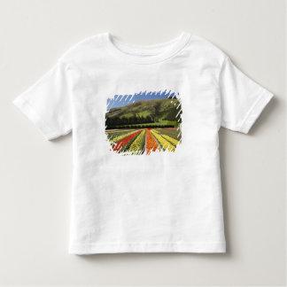 Tulip Fields, near Tapanui, West Otago, South 2 Tee Shirts