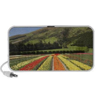 Tulip Fields, near Tapanui, West Otago, South 2 Travel Speakers