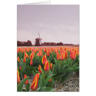 Tulip Flower Field and Windmill Card