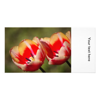 Tulip Flowers Photo Card