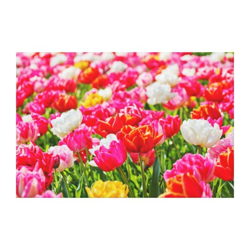 Tulip Garden Stretched Canvas Print