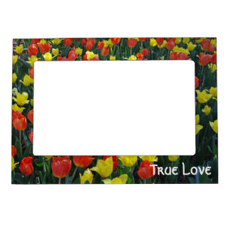 Tulip Garden in Orange and Yellow Magnetic Picture Frame