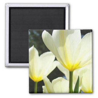 Tulip Garden magnet White Yellow Tulips Flowers