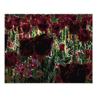 Tulip Garden Photo Art Illuminated