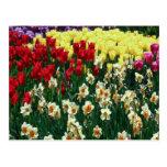Tulip Garden Postcards