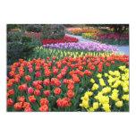 Tulip Gardens 13cm X 18cm Invitation Card