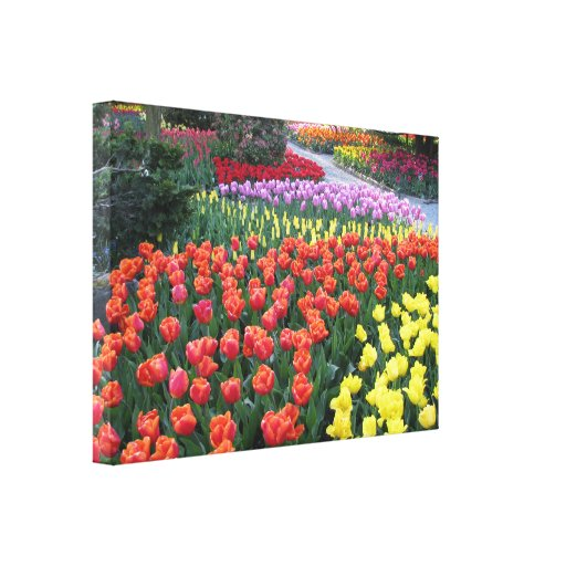 Tulip Gardens Gallery Wrapped Canvas