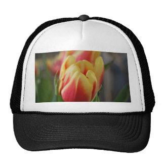 Tulip Hat