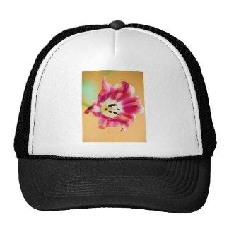 Tulip Hats