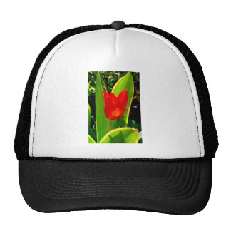 Tulip Trucker Hat