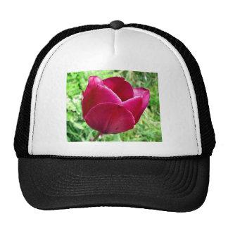 Tulip Trucker Hats