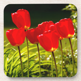 tulip impressions coaster