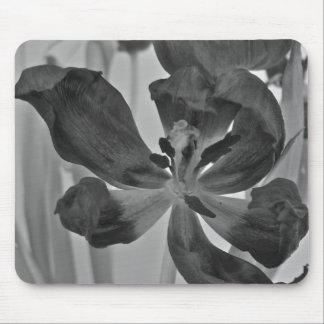 Tulip in Black and White Mousepad