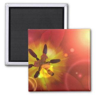 Tulip in Sunlight Magnet Magnets