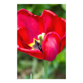 tulip in the garden stationery