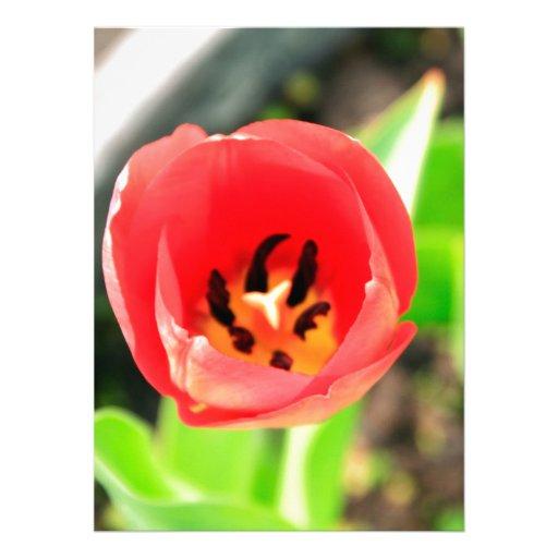 Tulip Custom Announcements