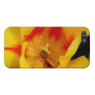 tulip macro iPhone 5/5S cases