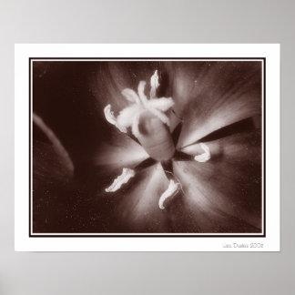 Tulip Macro Print