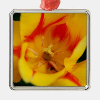 tulip macro Silver-Colored square decoration
