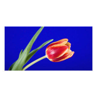 Tulip on blue background personalized photo card